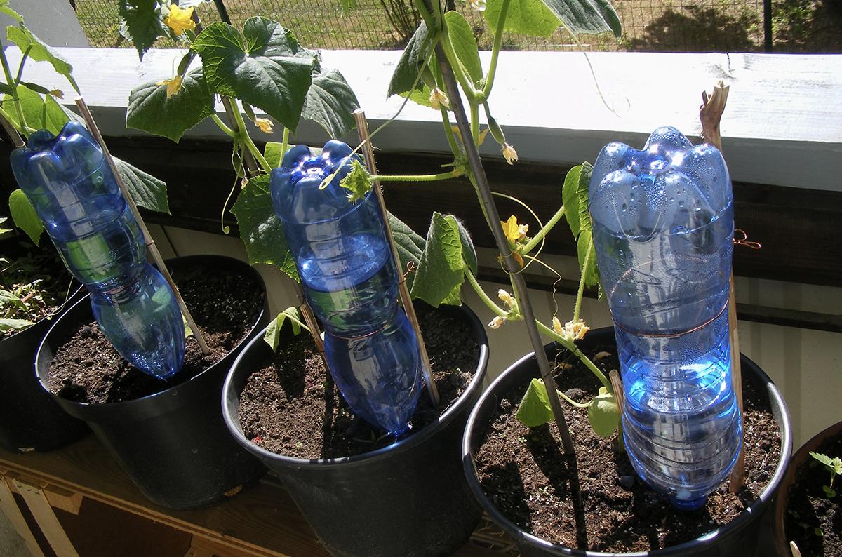 Bagnare Piante Con Bottiglie come innaffiare le piante quando si va in vacanza